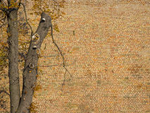 在一个五颜六色的砖墙旁边的美妙的树 图库摄影
