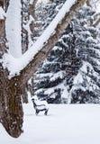 在一个亚伯大加拿大冬天降雪期间的公园长椅 免版税库存图片