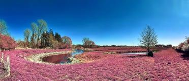 在一个亚洲紫色红外照片样式的美好和五颜六色的幻想风景 免版税图库摄影