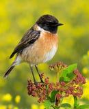 在一个亭亭玉立的分支的小鸟 库存照片