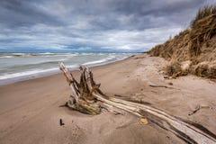 在一个休伦湖海滩的漂流木头在多云天空下 免版税库存照片