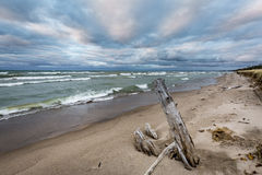 在一个休伦湖海滩的漂流木头在多云天空下 免版税库存图片