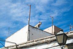 在一个传统白色安达卢西亚的房子的屋顶的一条狗在阿尔梅里雅 免版税库存照片