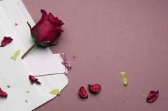 在一个信封的红色玫瑰在桃红色背景 免版税库存照片