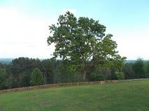 在一个俯视站点的孤立橡木在得克萨斯 库存图片