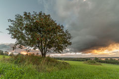 在一个倾斜域的一个结构树 库存图片