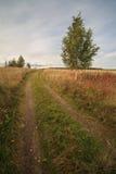 在一个倾斜域的秋天路与一个结构树 库存图片