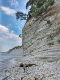 在一个倾斜的岩石的偏僻的杉树 免版税图库摄影