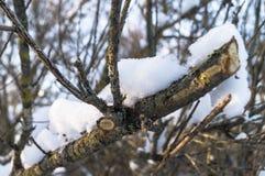 在一个光秃的概略的分支的闪耀的雪盖在软的阳光下 免版税库存图片