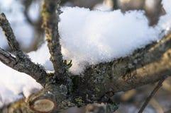 在一个光秃的概略的分支的闪耀的雪盖在软的阳光下 库存图片