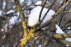 在一个光秃的概略的分支的闪耀的雪盖在软的阳光下 免版税库存照片