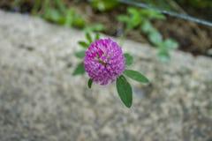 在一个具体密林中间的小紫色花 库存图片