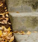 在一个具体楼梯的黄色槭树叶子 免版税库存照片