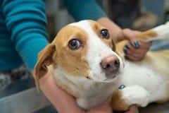 在一个兽医诊所的狗 免版税图库摄影