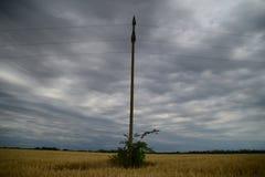 在一个农业领域的燕麦庄稼 免版税图库摄影
