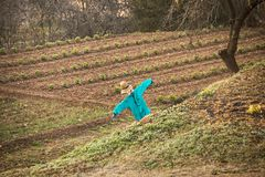 在一个农业领域的稻草人 免版税库存照片