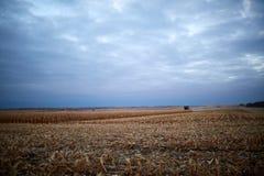 在一个农业领域的部分被收获的玉米 免版税库存图片