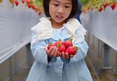 在一个农场的女孩采摘草莓在日本 免版税库存照片