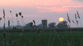 在一个农场的日落在加拿大 股票视频