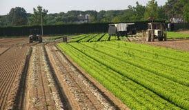 在一个农场的沙拉领域意大利和农夫两台拖拉机的  免版税图库摄影