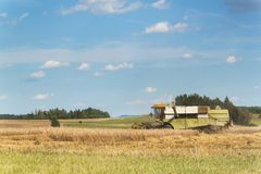 在一个农场的联合收割机收获成熟麦子在捷克 苹果庭院地面收获成熟时间结构树 五谷的耕种在一个农业农场的 免版税图库摄影
