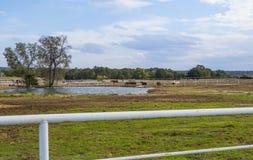 在一个农场的马在乡村模式的俄克拉何马- 库存照片