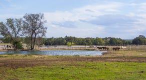 在一个农场的马在乡村模式的俄克拉何马- 免版税图库摄影
