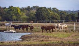 在一个农场的马在乡村模式的俄克拉何马- 免版税库存照片
