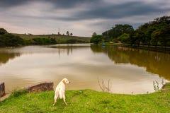 在一个农场里面的湖有狗的 免版税库存照片
