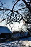 在一个农村房子附近的树枝在反对清楚的天空,白俄罗斯背景的一个冬天多雪的晴天  免版税图库摄影