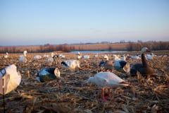 在一个农村池塘或湖附近被安置的诱饵水鸟 免版税图库摄影