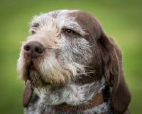 在一个农村设置的狗 免版税库存图片