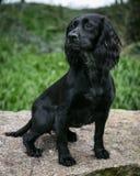 在一个农村设置的狗 免版税库存照片