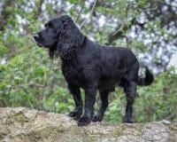 在一个农村设置的狗 免版税图库摄影