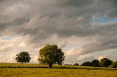 在一个农村风景的树 库存图片