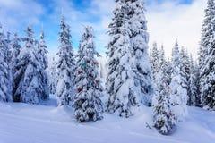 在一个冬天风景的装饰的圣诞树在太阳峰顶附近村庄  免版税库存图片