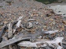 在一个冰河湖的漂流木头 免版税库存照片