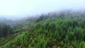 在一个冷杉森林的飞行在苏格兰的高地的薄雾的 股票录像