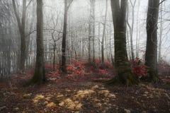 在一个冷的冬日期间,有雾的森林 库存照片