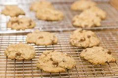 在一个冷却的机架的新鲜的被烘烤的软的巧克力曲奇饼 免版税库存图片