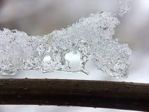 在一个冻结的分支的冰冷的样式 库存照片