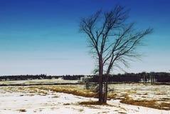 在一个冻结的领域的偏僻的树在一个冬日在1月 库存照片