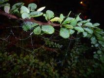 在一个分支上的易碎的蜘蛛网夜 免版税库存图片