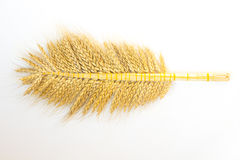 在一个分支栓的成熟麦子的许多耳朵 图库摄影