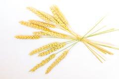 在一个分支栓的成熟麦子的许多耳朵 库存照片