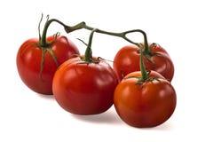 在一个分支的一些红色蕃茄与在被隔绝的白色背景的叶子 库存照片