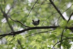 在一个分支的一只鸟在森林里 库存图片
