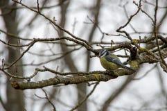 在一个分支的一只鸟在秋天森林里 库存照片