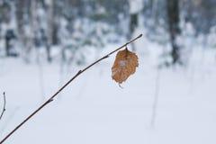 在一个分支的一片孤立桦树叶子在雪花在冬天 库存照片
