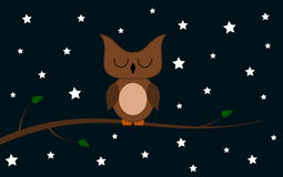 在一个分支的一头猫头鹰在晚上 免版税库存图片